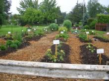 Common Ground Garden