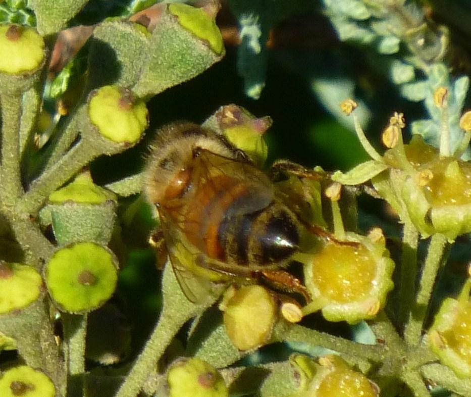 honey bee essay contest